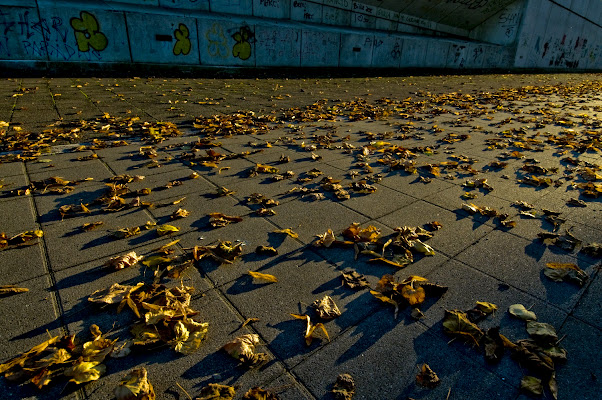 Righe tra le foglie di Croatti Carlo