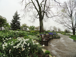 Photo: Benches in a rainy garden in spring at Cox Arboretum in Dayton, Ohio.