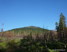 Photo: Burned ponderosa pine plantation, summit of Black Butte in the background. Black Butte Burn.