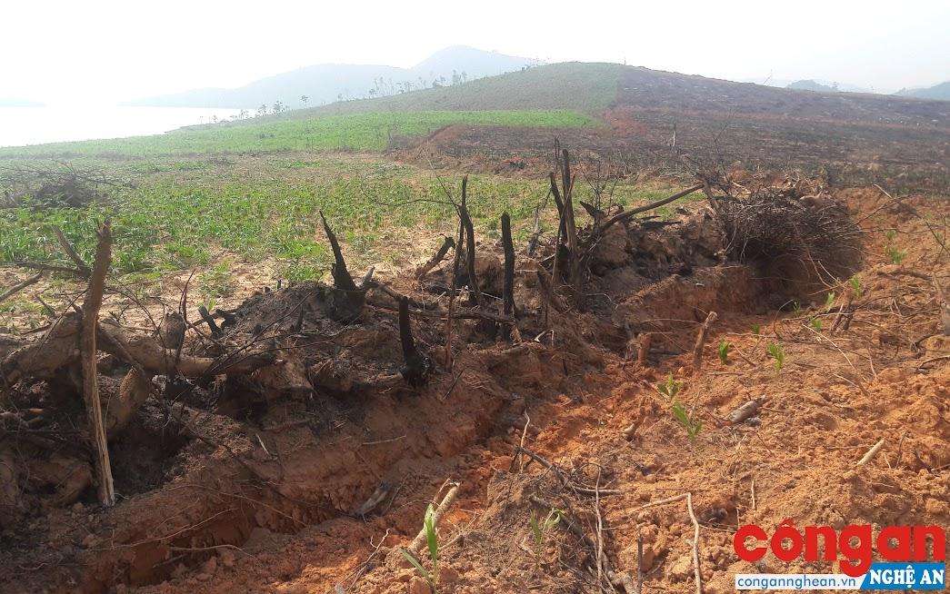 Năm 2018, có hàng chục ha rừng phòng hộ tại xã Tân Thắng bị chặt phá