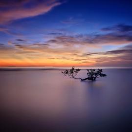 Alone by Adhy L Occhio d'Aquila - Landscapes Sunsets & Sunrises ( blue, sunset, beach, tree, landscape,  )