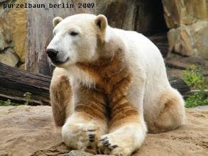 Photo: Knut hat seinen Sandhaufen verteidigt :-)