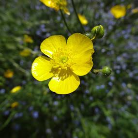 by Kris Van den Bossche - Flowers Single Flower
