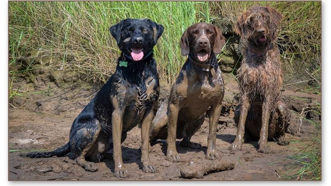 Marvelous The Posh Dog Company Mobile Dog Grooming High Peak Home Interior And Landscaping Analalmasignezvosmurscom
