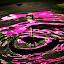 Waterdrop by Arafat Chowdhury - Abstract Water Drops & Splashes ( waterdrop backdrop splash backlight pink green yellow black )