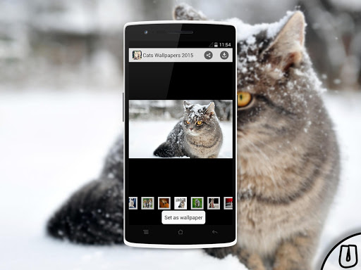 Cats Wallpapers 2015