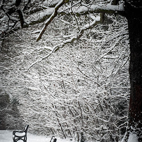 January Woodland Snow, London by Phil Clarkstone - Nature Up Close Trees & Bushes