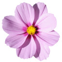 Beautiful Flowers HD Wallpapers New Tab Theme