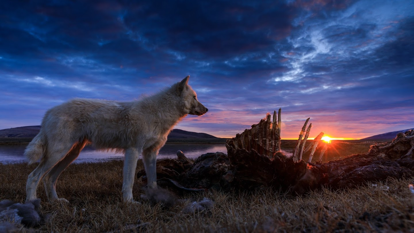Kingdom of the White Wolf