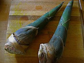 Photo: fresh bamboo shoots