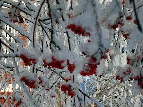 Photo: но птички не могут добраться до ягод