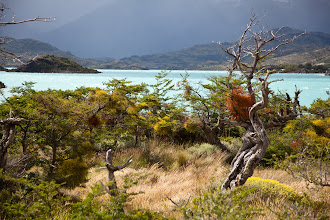 Photo: NP. Torres del Paine