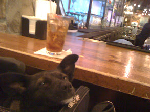 Photo: Little dog hanging at the Alaska Lodge bar in the Seattle airport