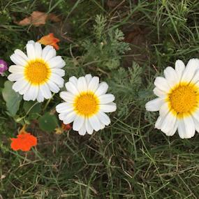 3 Flowers by Som Nath - City,  Street & Park  City Parks (  )