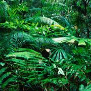 live rainforest wallpapers