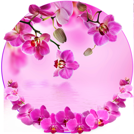 Orchid Spring Flowers Theme (app)