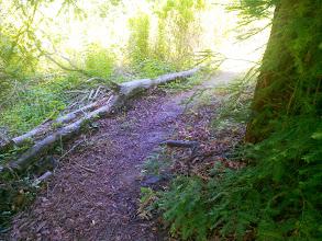 Photo: Wet path under redwood