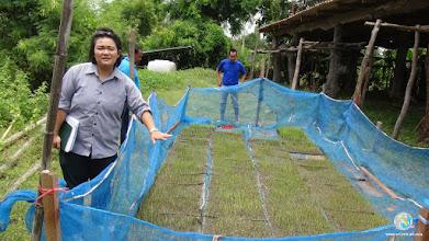 Photo: Seedling preparation - FPAR (Srikhorapum, Surin)