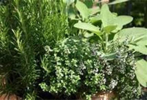 Cleansing Herbs For Your Body Recipe