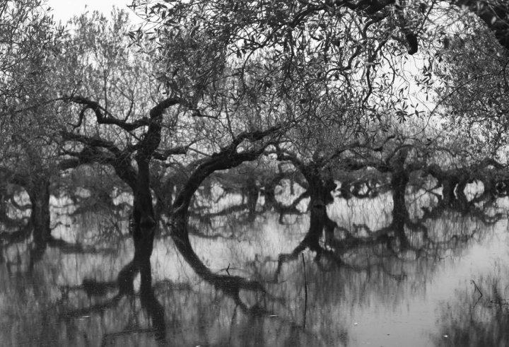 Immensi ulivi immersi di kaja1971