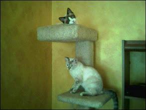 Photo: MB & Boo (2006)