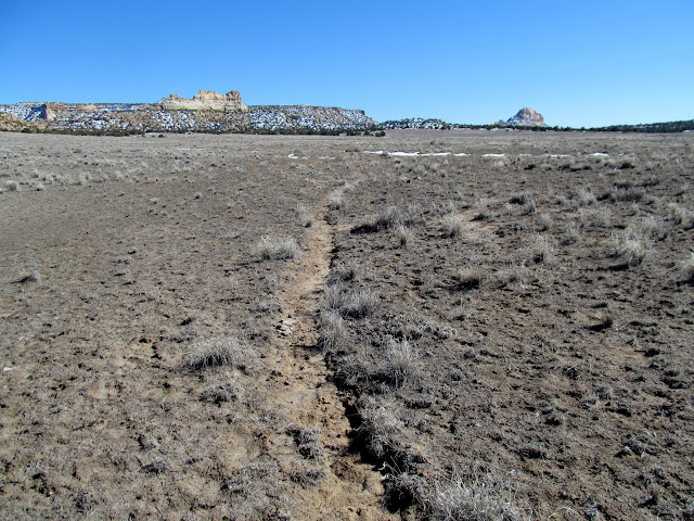 Following a cattle trail