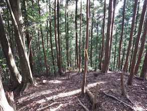 傾斜が緩み植林帯に