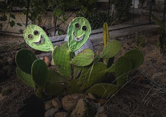 Cactus mania di Eduard