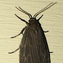 Uniform Lichen Moth