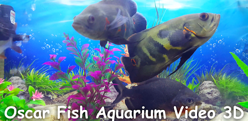 Oscar Fish Aquarium Video 3D - by HD Video Themes - Personalization