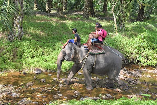 Elephant riding in Huay Tho Safari Camp at the foot of Phanom Bencha mountain