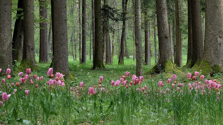 Il bosco in primavera