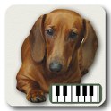 Piano of Dogs icon