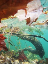 Photo: Root and red leaves under teal water at Eastwood Park in Dayton, Ohio.