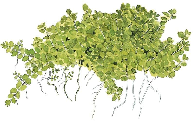 Låga växter och mossor