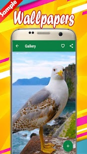 Seagull Wallpapers - náhled