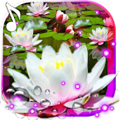 Lotos Lily Water Live Wallpaper Android APK Download Free By SweetMood