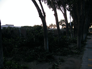 Photo: QRRS garden workers clipped branches for trees alone its sports yard and stadium.