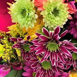 Colorful bouquet by Carol Leynard - Instagram & Mobile iPhone ( mixed bouquet, bouquet, colorful bouquet, petals )