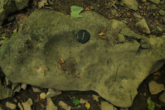 Photo: Áramlási kagylók egy patakmederben heverő triász mészkövön