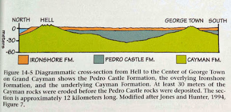 Photo: Islands from the Sea - Geological Stories of Cayman by Murray A. Roed, 2006 (p.65). Diagrammatic cross-section from Hell to the centre of George Town (Ironwood Forest area) on Grand Cayman shows the Pedro Castle Formation, the overlying Ironshore Formation, and the underlying Cayman Formation. http://www.sandhillbooks.com/cgi-bin/sandhillbooks/00028.html