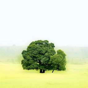 Survival of the fittest! by Deepak Goswami - Landscapes Prairies, Meadows & Fields