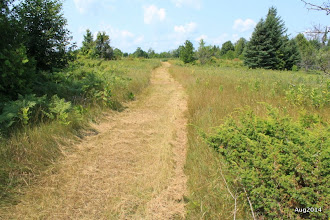 Photo: Goldenville Walking trail runs for 5 km in both ways.