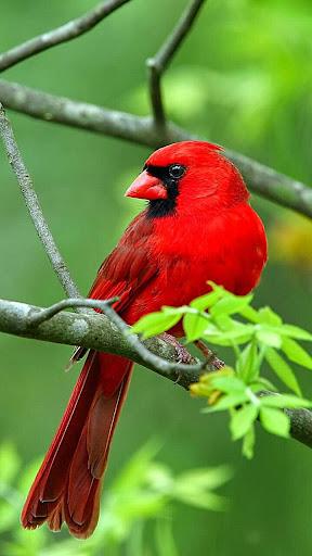 無料个人化Appの鳥ライブ壁紙 記事Game