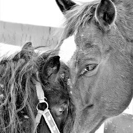 Best Buds by Linda    L Tatler - Black & White Animals (  )
