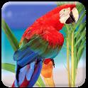 Live Bird Wallpaper icon