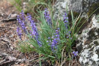 Photo: Kvetena medzi skalkami