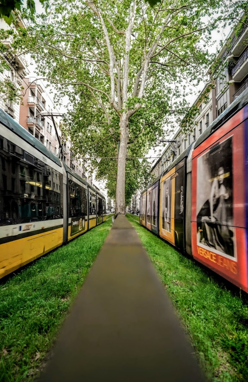 Tram tram quotidiano di piccio_ne_ph