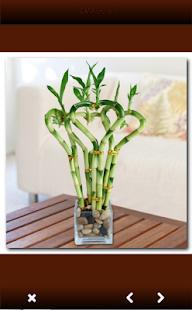 Indoor Plants - náhled
