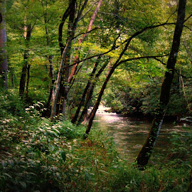 River and forest by Rhonda Kay - Landscapes Forests